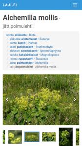 laji_mobiili_taksonomia